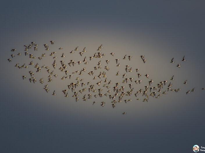 Fsai130406 02 Oiseaux