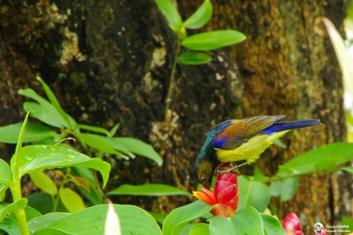 Fsai130910 04 Oiseaux