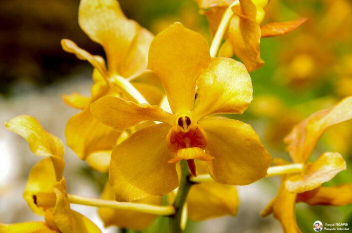 Fsai130919 04 Fleurs