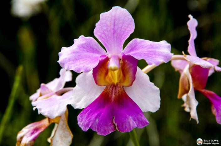 Fsai130919 05 Fleurs