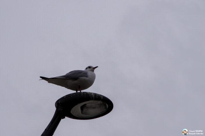 Fsai131217 05 Oiseaux