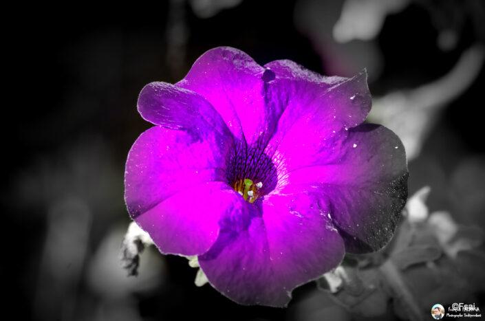 Fsai140817 07 Fleurs