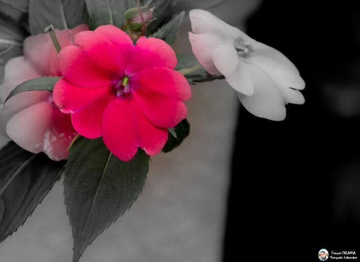 Fsai141017 09 Fleurs