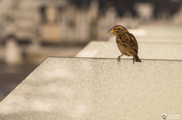 Fsai141109 09 Oiseaux