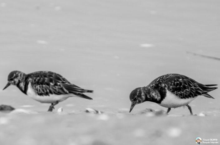 Fsai150406 15 Oiseaux