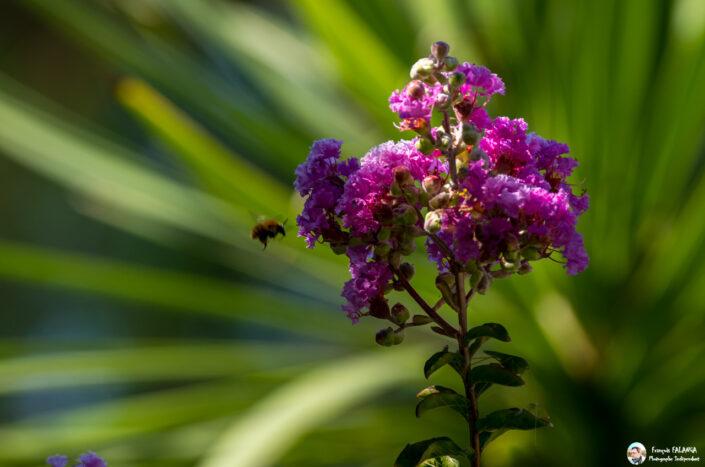 Fsai160828 10 Fleurs