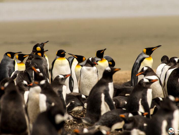 Fsai161211 04 Iles Falkland