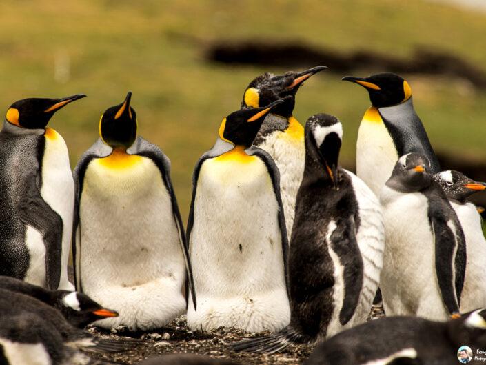Fsai161211 06 Iles Falkland