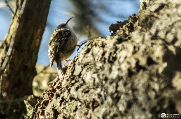 Fsai170325 22 Oiseaux