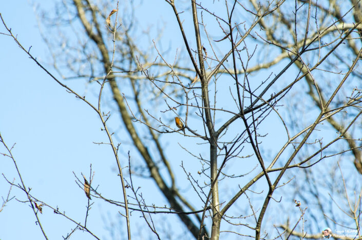 Fsai170325 24 Oiseaux