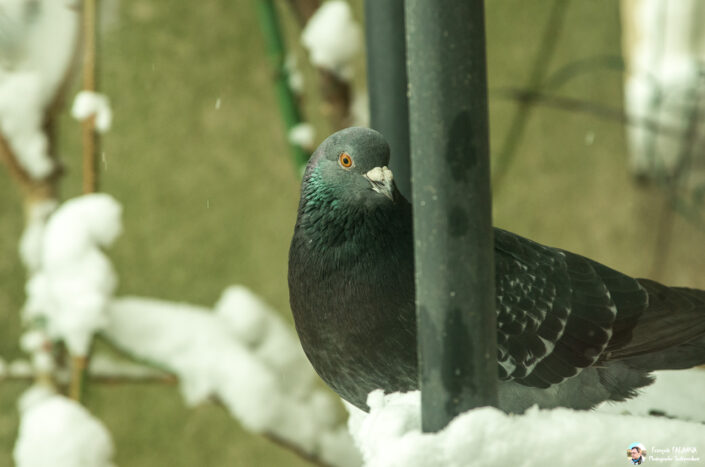 Fsai180207 30 Oiseaux