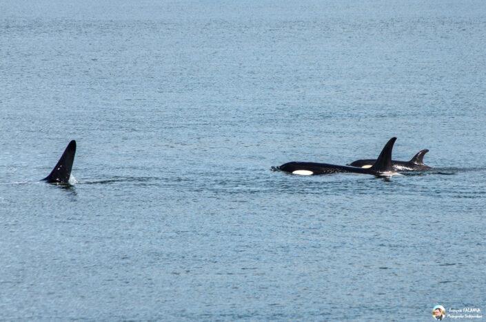 Fsai180531 020 Juneau WhaleQuest
