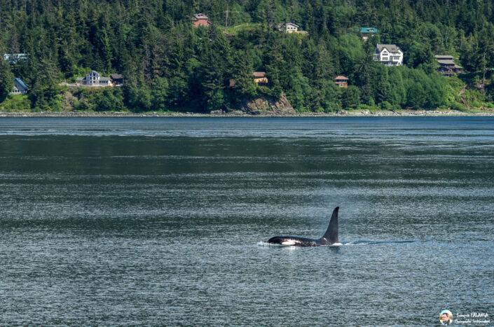 Fsai180531 023 Juneau WhaleQuest