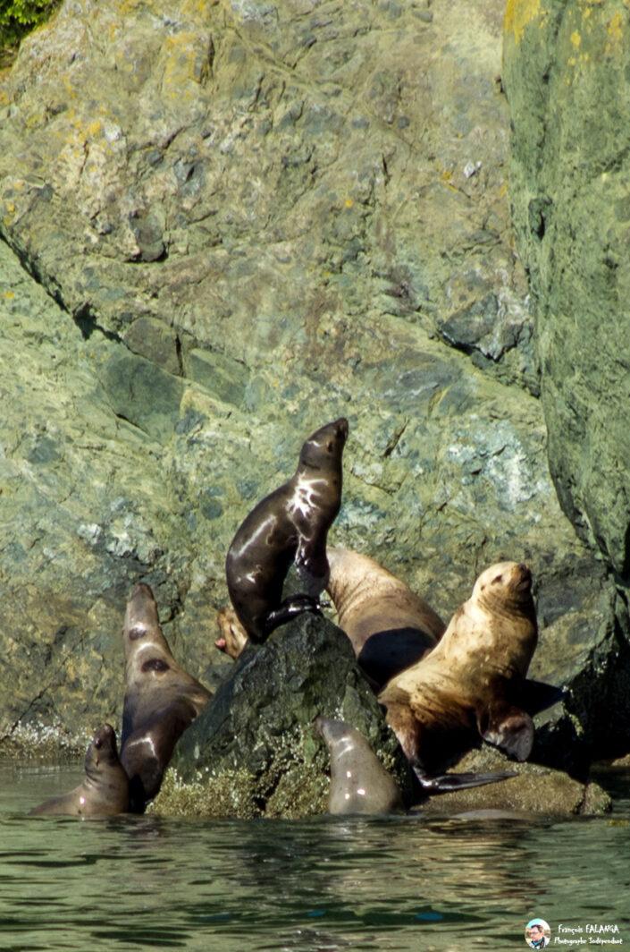 Fsai180531 039 Juneau WhaleQuest