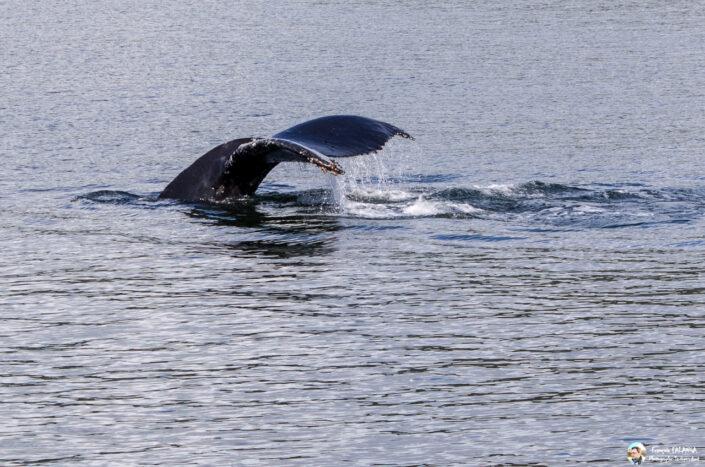 Fsai180531 073 Juneau WhaleQuest