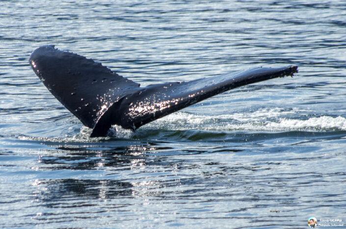 Fsai180531 084 Juneau WhaleQuest