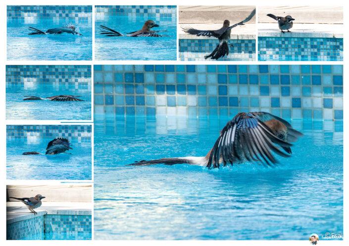 Fsai200910 20 Oiseaux
