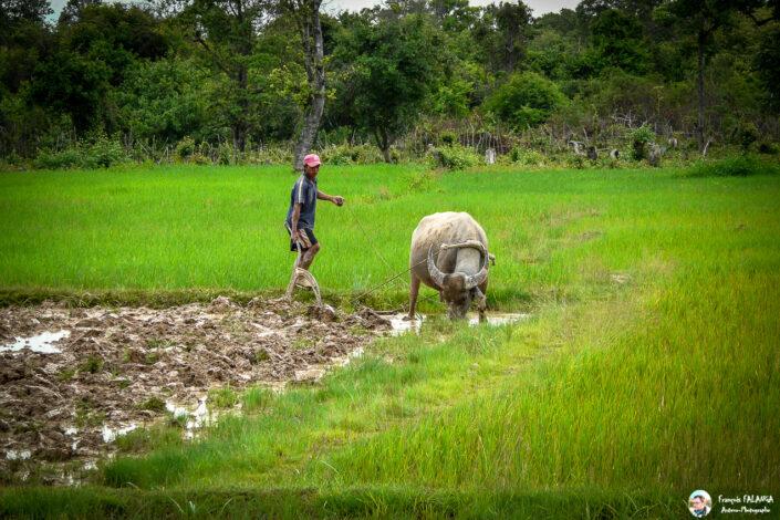 Fsai080713 07 Laos Pakse Vatphou